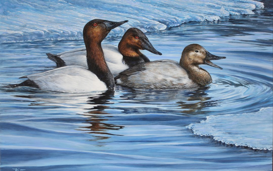 Canada's Duck Stamp-Paying For Conservation One Stamp At A Time