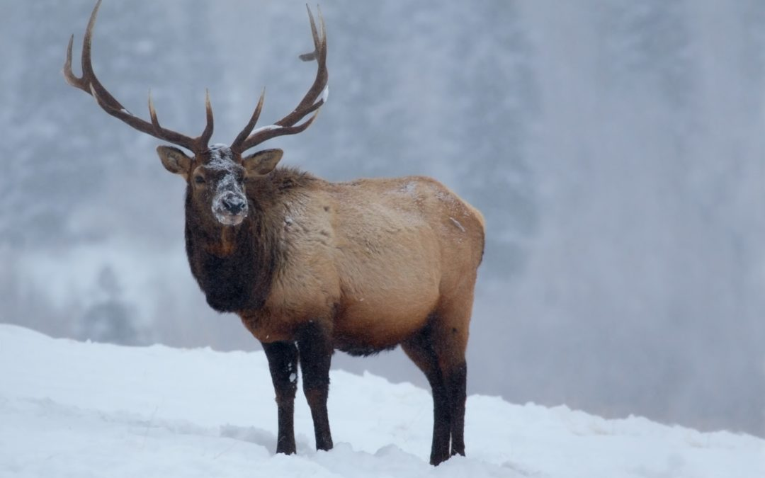 Should We Feed Wildlife During Extremely Cold Weather?