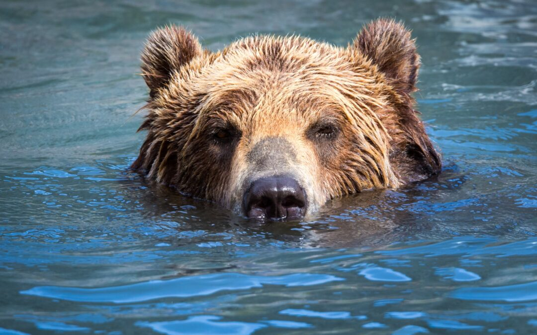 Wildlife Survival in Extreme Heat Events