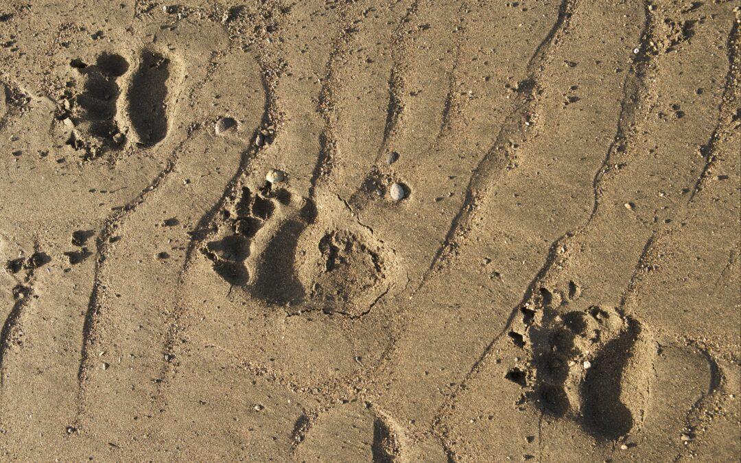 Is Hunting Threatening Apex Predator Biodiversity?
