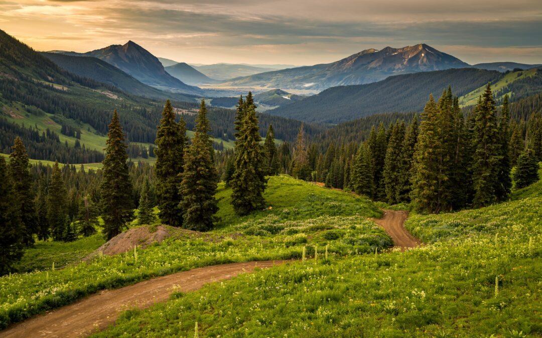 The Impact of Resource Roads on British Columbia's Wildlife