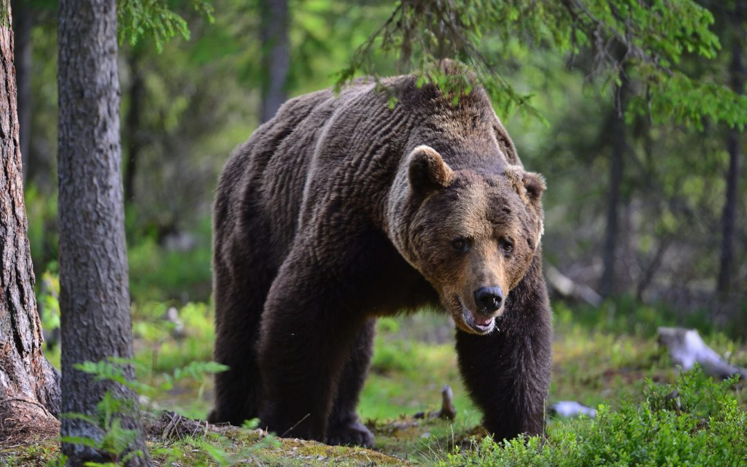 Bear Spray – What To Do When It Expires