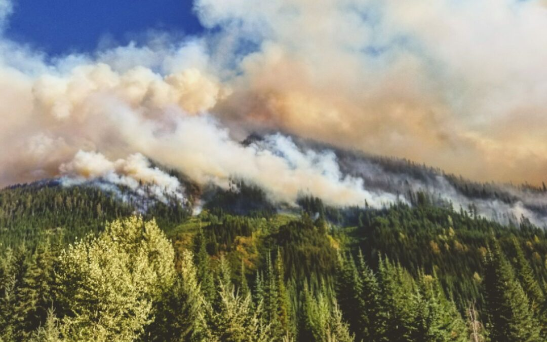 Salvage Logging British Columbia's Wildfires – Will Wildlife Conservation and Science Matter?